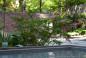 Schovaná zahrada