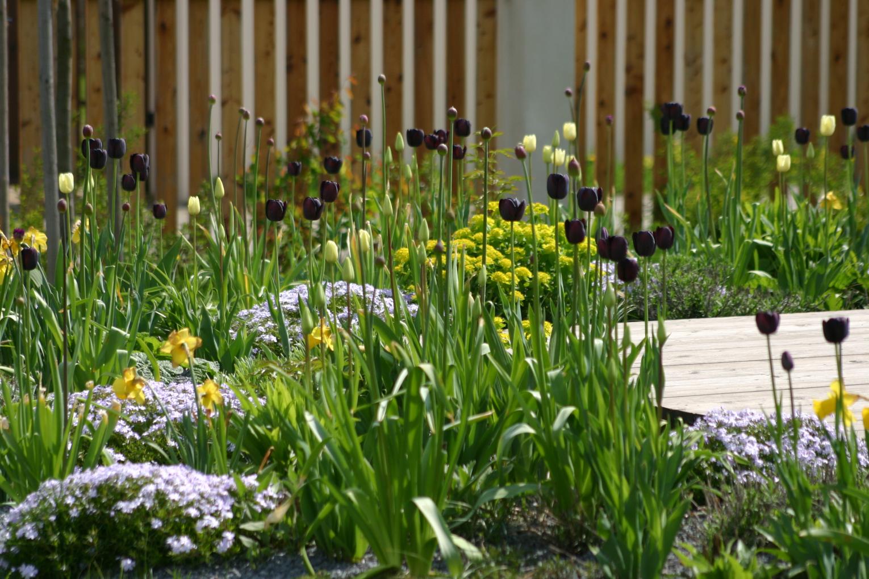 Zahrada u rodinného domu ve Vraném nad Vltavou
